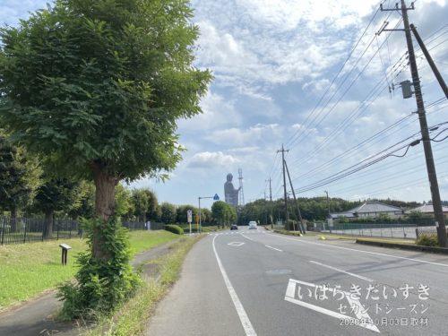 牛久大仏周辺は道路が広く、自転車も走りやすい。