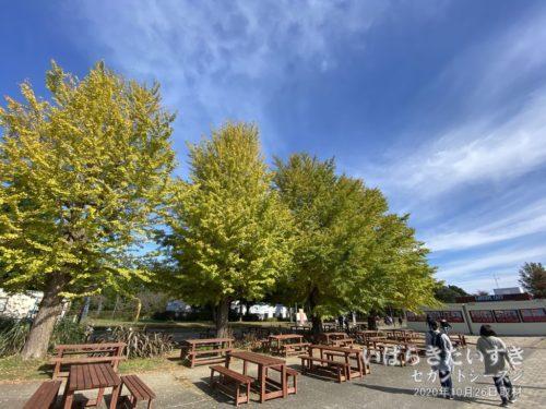 海浜公園園内も、少しずつ紅葉づく。