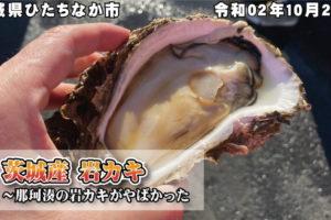 茨城産 岩カキ~那珂湊の岩カキがやばかった