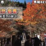 花貫渓谷 紅葉 令和02年11月21日 茨城県高萩市