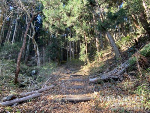 登山口開始直後は、平和な道。