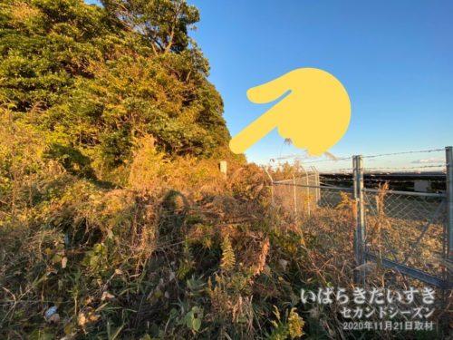 ヤブが生い茂り、あの茨城百景碑にアクセスできない。