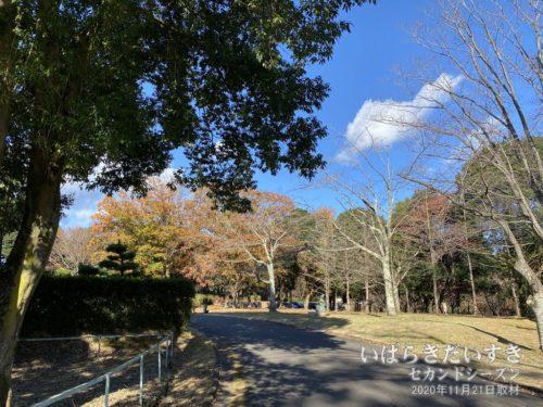 高萩市森林公園内も、紅葉がいい感じ。