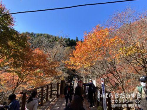 汐見滝吊橋の紅葉。