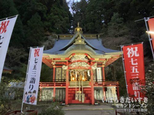 花園神社 拝殿 ライトアップ。