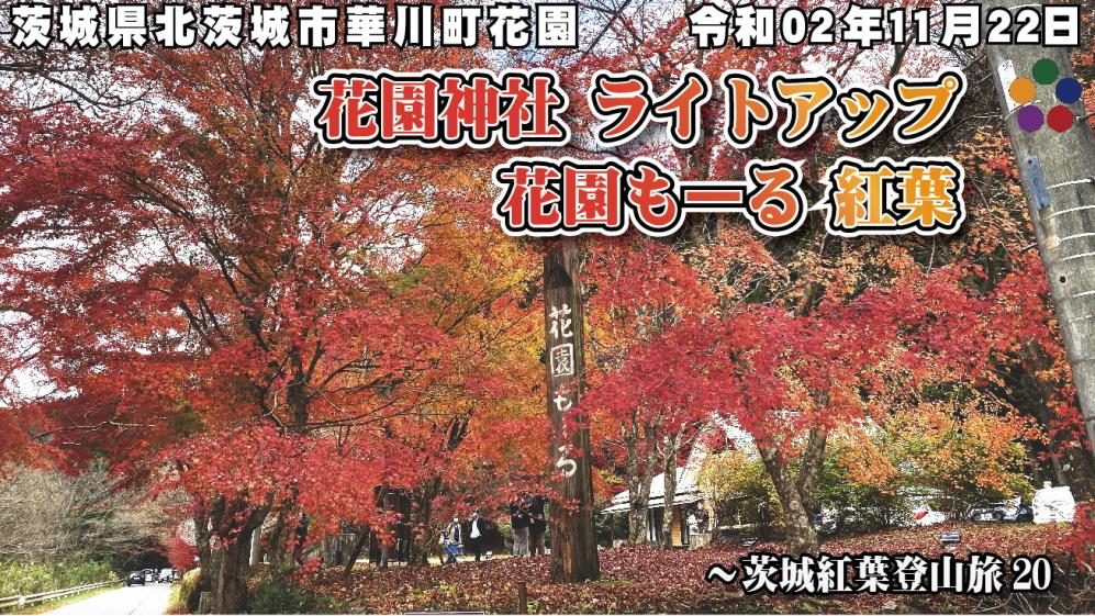花園神社 ライトアップ 花園もーる 紅葉 令和02年11月22日 茨城県北茨城市華川町花園