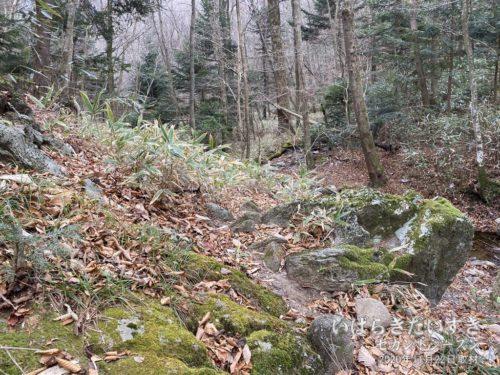 岩が露出するところもある。