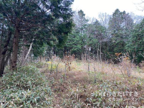 栄蔵室山頂直前の、植樹された場所。