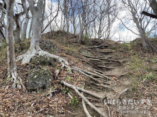 木の根っこを階段代わりにするロープ場。
