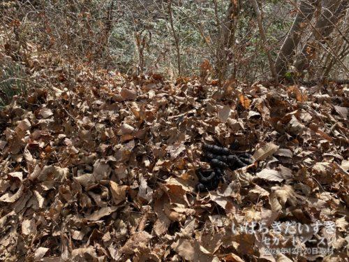 真っ黒な、何かの動物の糞(フン)が積み重なっている。あちこちにこういうのがあります。