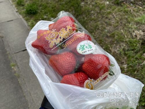いただいたイチゴも、持って歩くには鮮度が落ちてしまうので、歩きながら完食します。